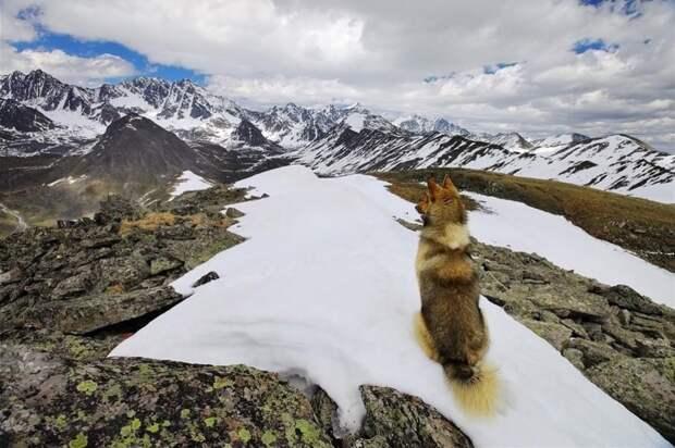 Altai15