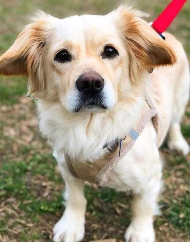 Собака на траве