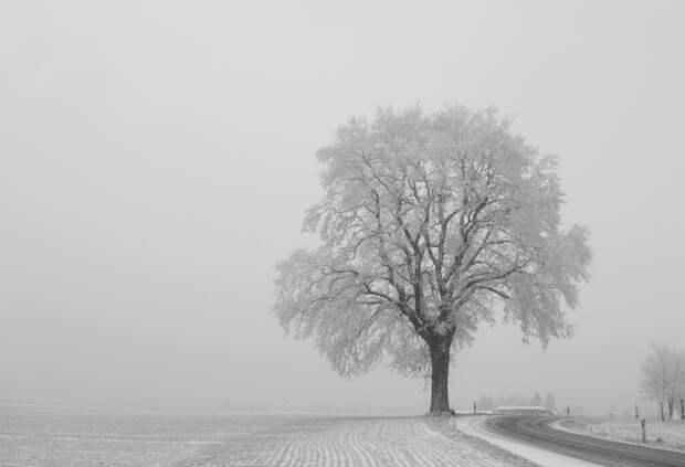 Туман с видимостью до 500 метров ожидается по Удмуртии 26 и 27 ноября