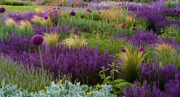 Простые приемы для создания мистического фиолетового сада