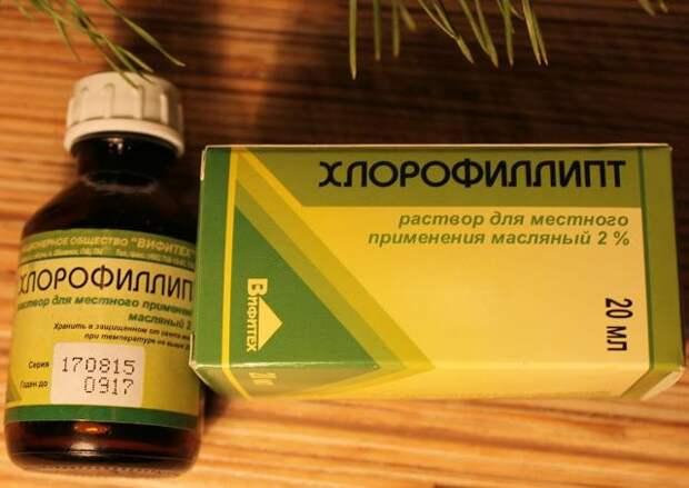 Хлорофиллипт — доступное средство от 15 болезней. Вот самые эффективные рецепты