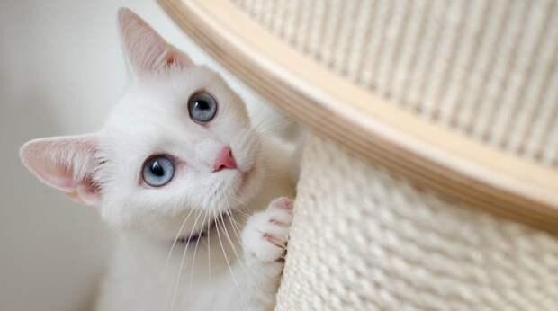 Что делать, если кошка дерёт обои