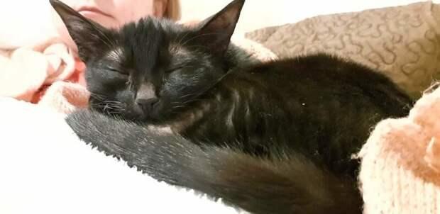 Шури заметно подросла за этот непростой год, но она всё ещё в два раза меньше обычной кошки домашний питомец, животные, забота, кошка, спасение
