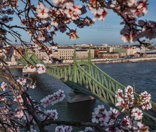 Хроники апокалипсиса: 29 фотографий из карантинного Будапешта