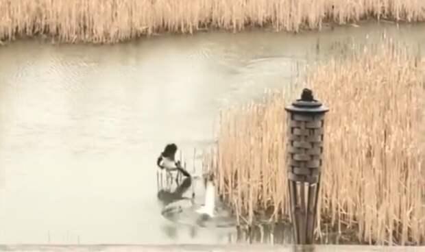 Гусыня, защищая своё потомство, не оставила чайке шансов на спасение