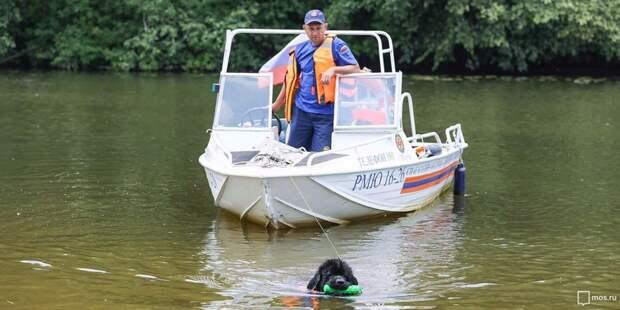 На Большом Садовом пруду спасатели вытащили из воды нетрезвую женщину