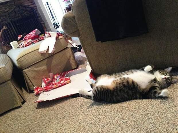 3. Кот открыл все рождественские подарки. А что, не надо было? А для чего они тогда? животные, новый год, праздник к нам приходит, разрушительная сила, рождество, собаки и кошки, юмор