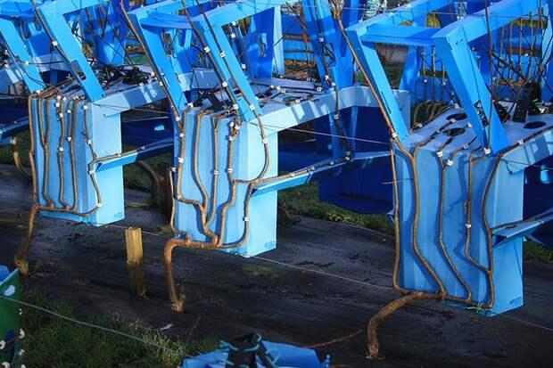 7 удивительных фото мебели, которую выращивают на грядке