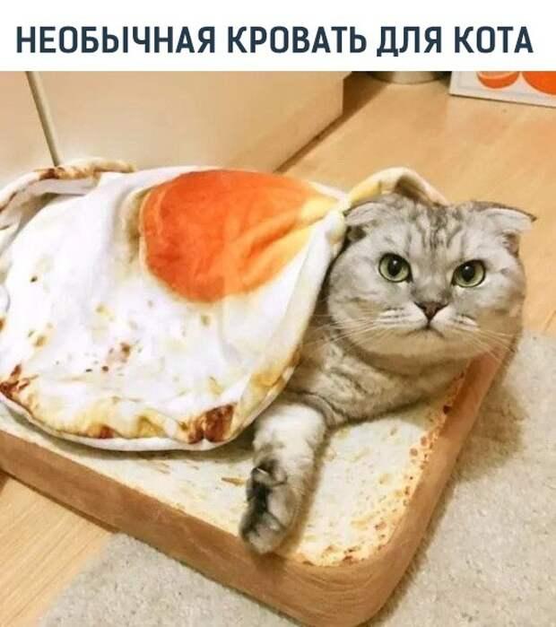 Постелька для кота