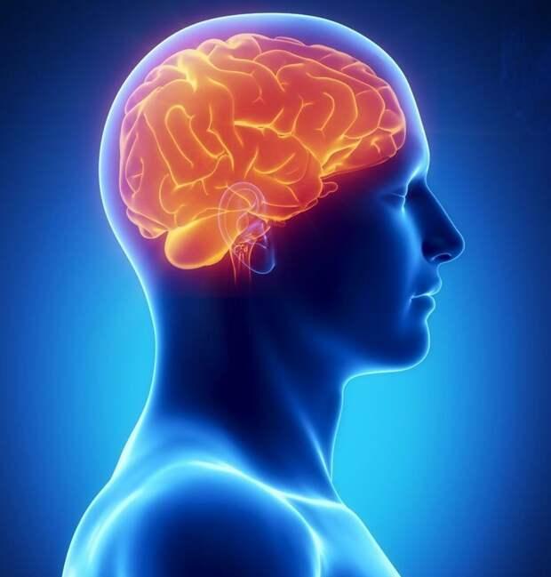 Как остановить старение мозга
