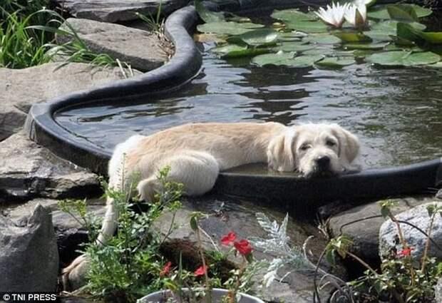 Приятно в жару подремать у воды! животные, мило, собаки, фото