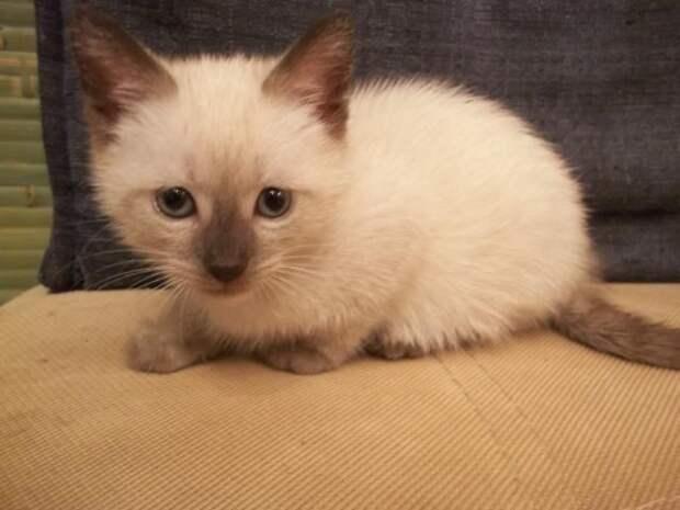 Доска(сайт) бесплатных объявлений о кошках - частные объявления Москвы: дать, подать, разместить объявления