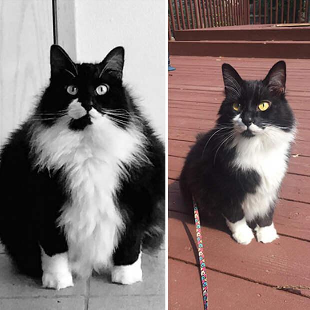 Пока ты ел на карантине, эти 10 котов смогли похудеть