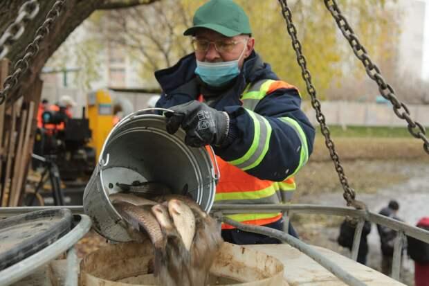 Видео: карасей и карпов из Ясного пруда переселили в Дворцовый
