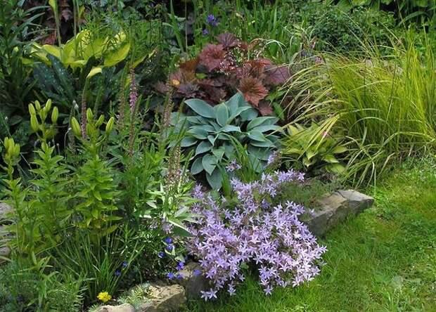 Клумба с декоративно-лиственными растениями