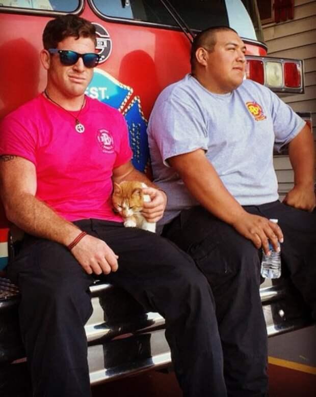 """""""Следователь по поджогам"""". Бродячая кошка обрела дом на пожарной станции"""