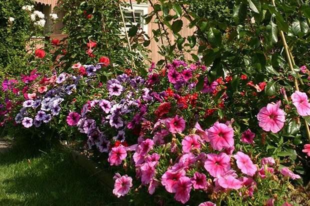 Цветники от А до Я. Как спланировать красивые клумбы и выбрать растения