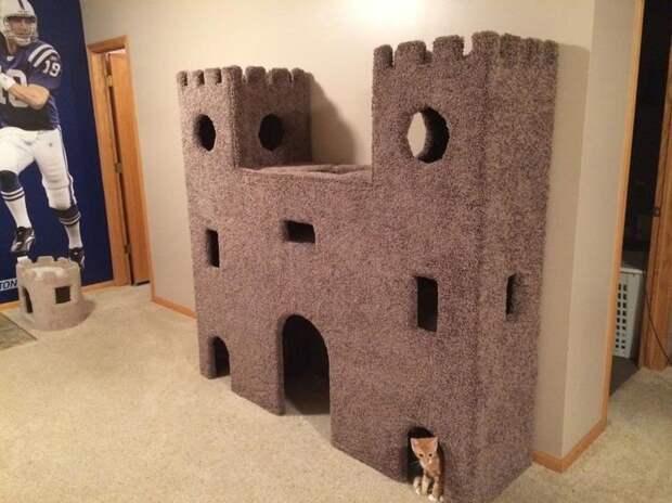 Или большого кошачьего замка для крошечного котенка? домашний питомец, животные, жизнь, кот, прикол