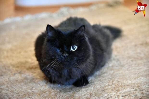 Одноглазая Кнопочка - самая ласковая и ручная из всех кошек Лучии. Фото: Влад КОМЯКОВ