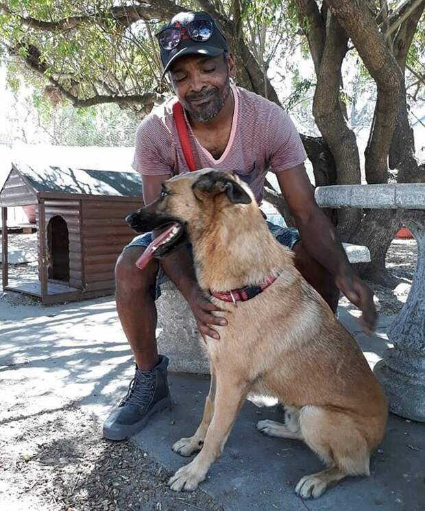Пес, защитивший хозяина от ножа, чудом остался жив Немецкая овчарка, Счастливый конец, верность, животные, защитник, нападение, собаки, человек и собака
