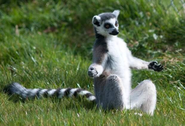 животные занимающиеся йогой, животные йоги