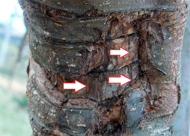 Арбопластика: вплетение в природу