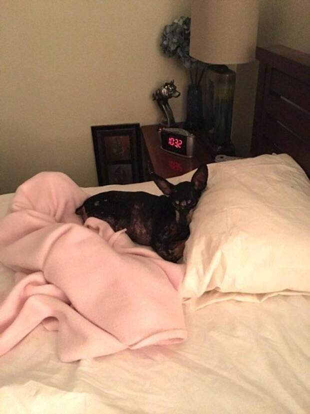 Одинокая женщина пришла в приют и попросила дать ей самую ненужную собаку. Вот кого ей предложили…