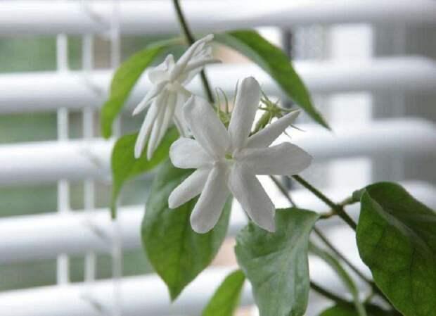 растения для положительной энергии
