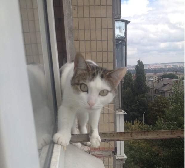Кошка за окошком. Что её ждет?
