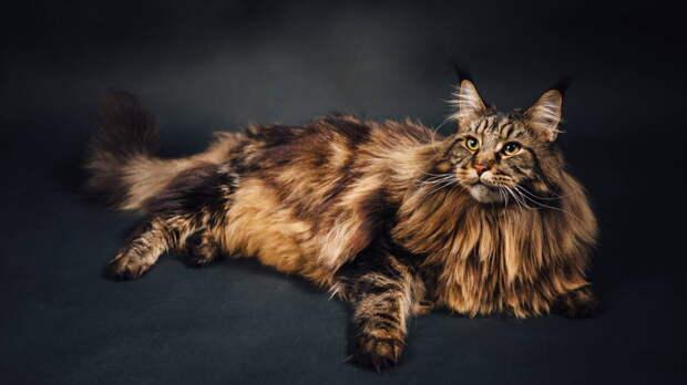 Обидчивые и требовательные: каких котов не рекомендуют заводить