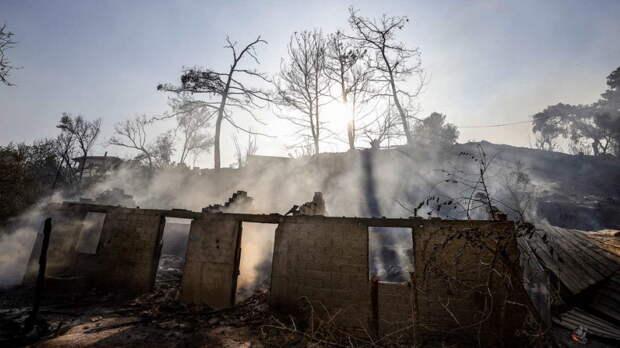 Подозреваемого в поджогах лесов задержали в Турции