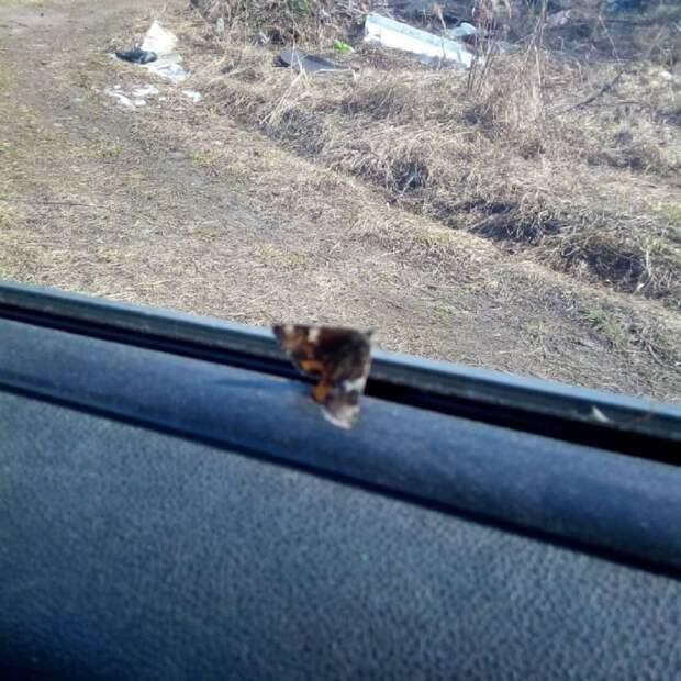 Водитель из Бескудниковского подвез  необычного пассажира