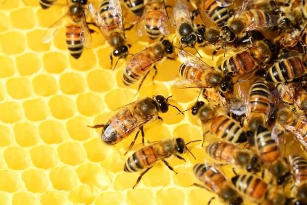 Пасечники Удмуртии продают мёда в полтора раза больше, чем производят