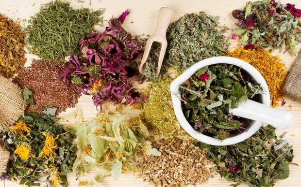 Травы для очищения организма от шлаков и токсинов