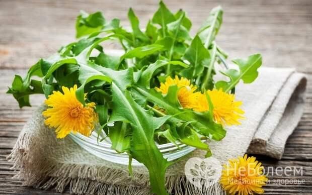 Одуванчик – съедобная весенняя трава