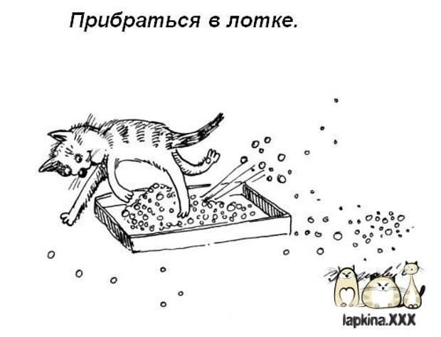 Обязанности кота дом, кот, обязанности