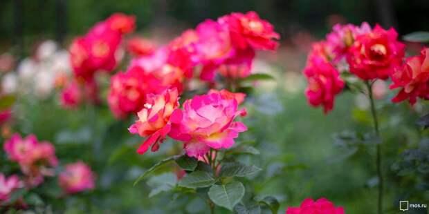 У дома на Ленинградке появились цветы
