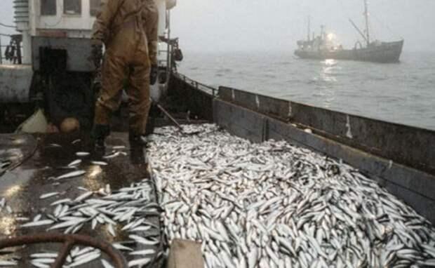 Китайцев заподозрили в планах перехватить добычу рыбы в морях России