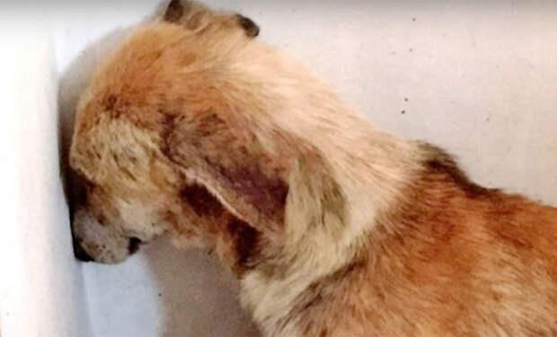 Пса по кличке Ангел забрали у жестокого хозяина, он все время смотрела в стену
