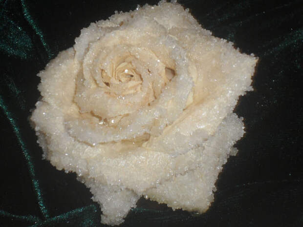 Засахаренная роза — для украшения тортов