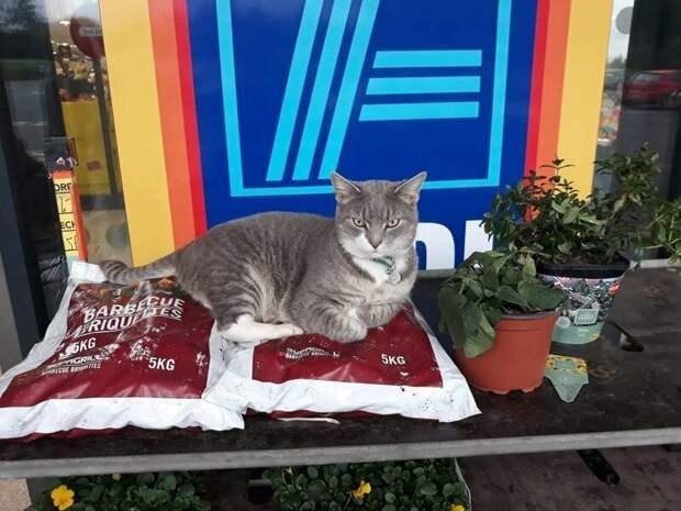 Когда семья переехала, кот не забросил своё хобби и стал наведываться другой супермаркет возле дома в мире, животные, звезда, история, кот, люди