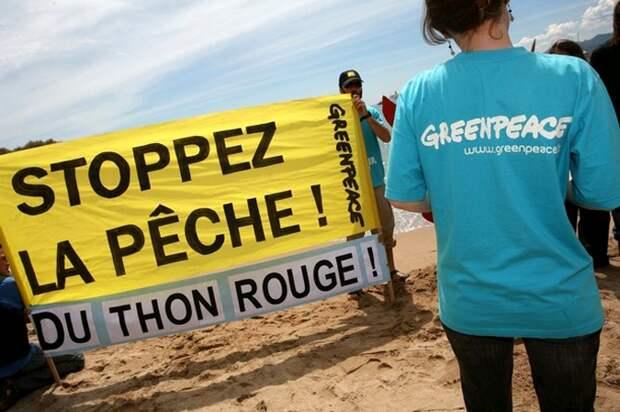 Особенности экологической рыбалки: активист Greenpeace из ФРГ незаконно ловил рыбу в Коми