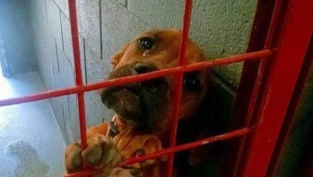 Фото этой собаки разлетелось по Сети и всего через один день ее жизнь кардинально изменилась