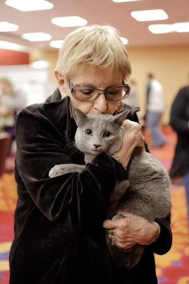 выставка кошек, National Norwegian Forest Cat Breed Club Show, национальная норвежская выставка кошек