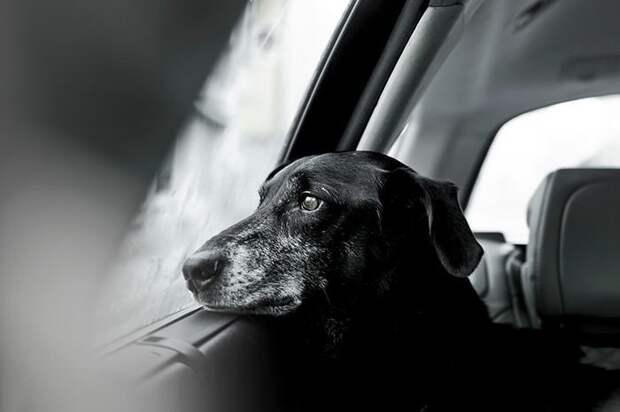 Лучшие фото собак 2018 года national geographic, животные, собаки