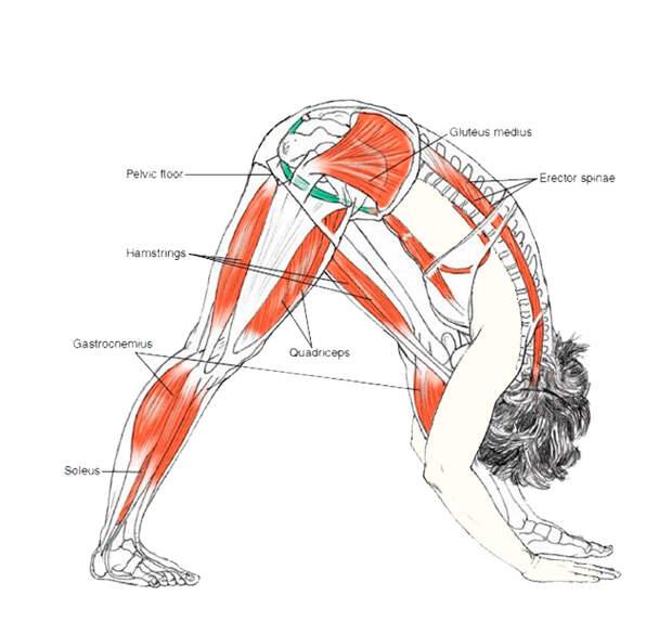 Незаменимые наклоны: обязательное упражнение на каждый день