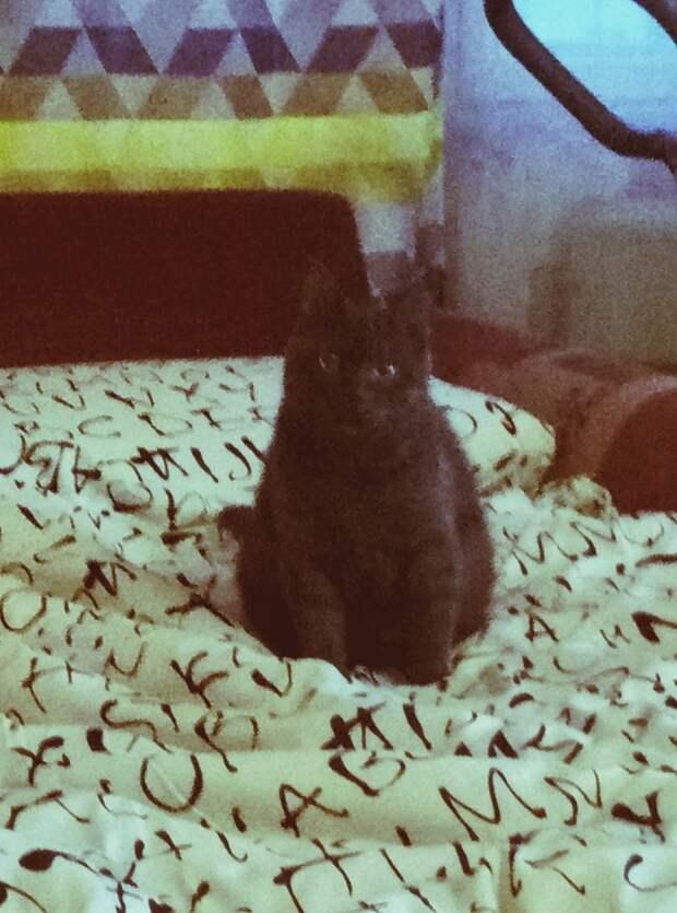 черный кот на одеяле