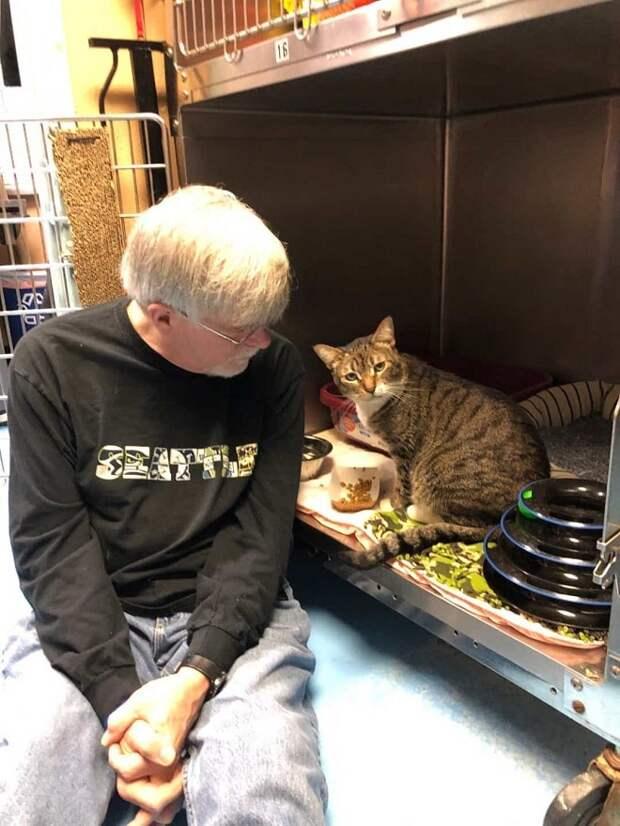 Котик с раной на шее ждал помощи, но не думал, что окажется в новом доме