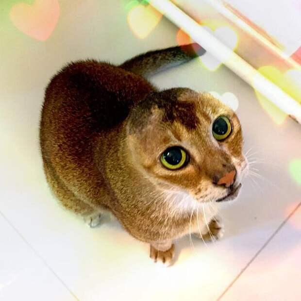 Безухий кот Картошка нашел не только новый дом но и верных друзей