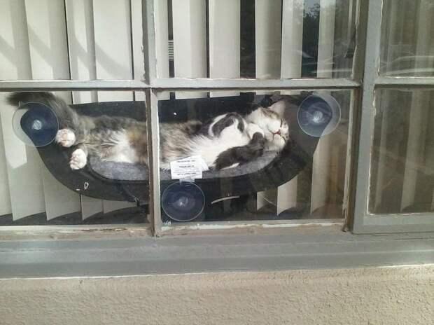 Мягкая лежанка на присосках возле окна, где кот сможет не только наблюдать за происходящим снаружи, но и греться на солнышке — разве это не идеальное место? домашний питомец, животные, жизнь, кот, прикол